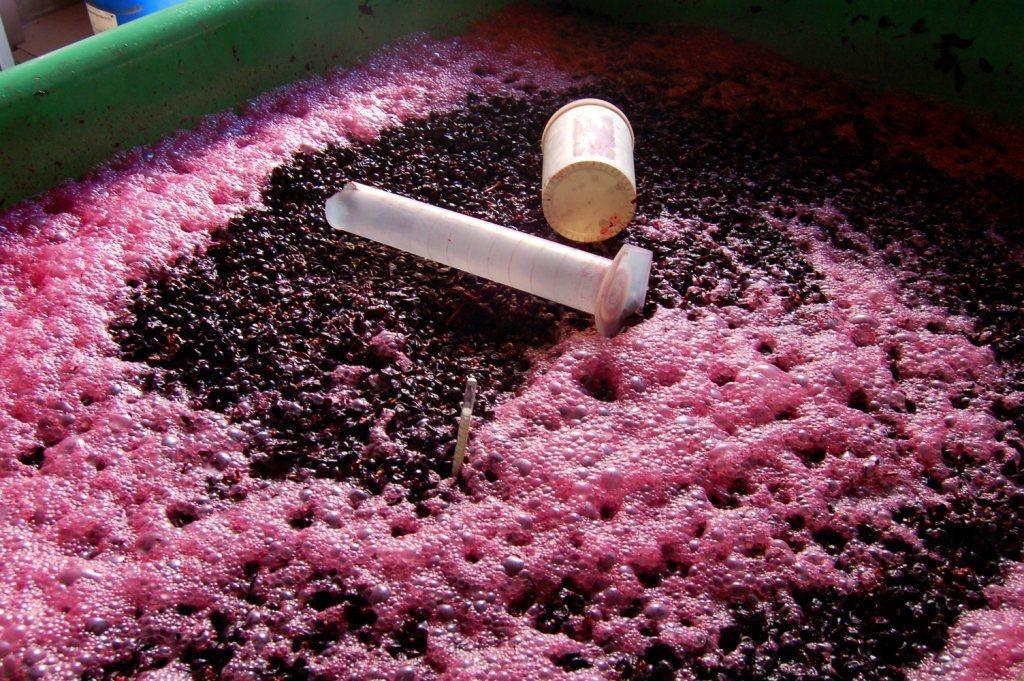 Stande mit Wein - Weingut zum Frohhof, Neftenbach